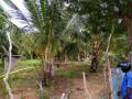 vavuniya-eluthumadduval-land-for-sale-small-0