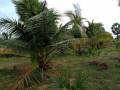 vavuniya-eluthumadduval-land-for-sale-small-1