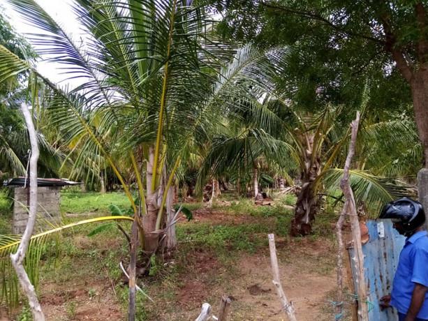 vavuniya-eluthumadduval-land-for-sale-big-0
