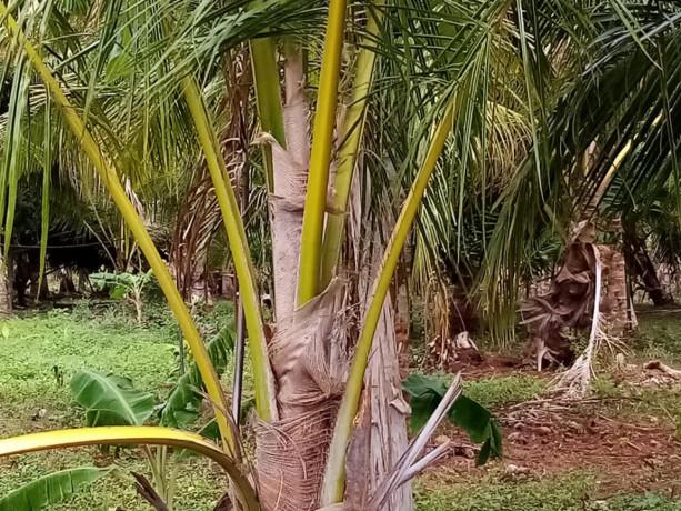 vavuniya-eluthumadduval-land-for-sale-big-2