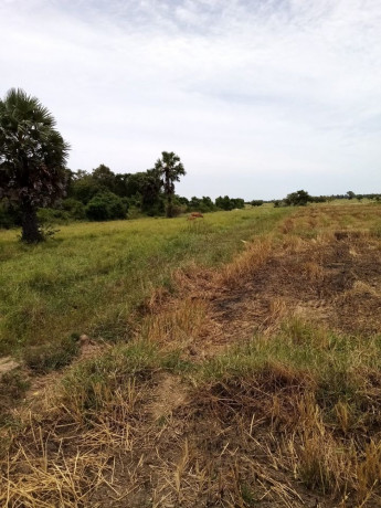 kilinochchi-paddy-field-for-sale-big-0