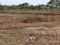 mannar-paddy-land-for-sale-small-1