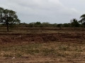 mannar-paddy-land-for-sale-small-2
