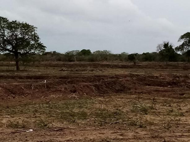 mannar-paddy-land-for-sale-big-2
