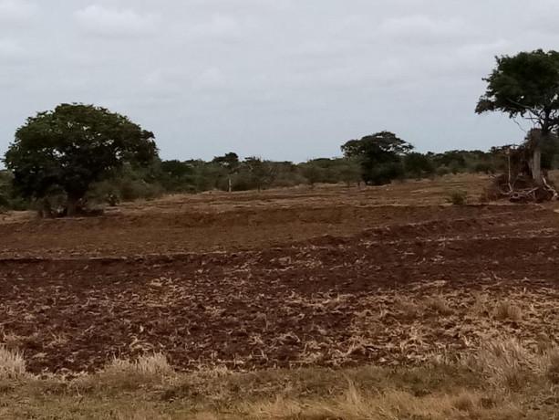 mannar-paddy-land-for-sale-big-0