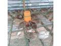 kaadai-for-sale-in-jaffna-small-2