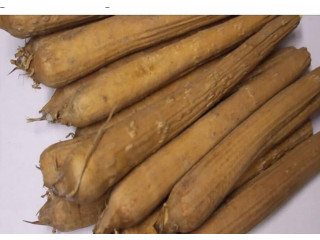 Palmyra tuber for sales
