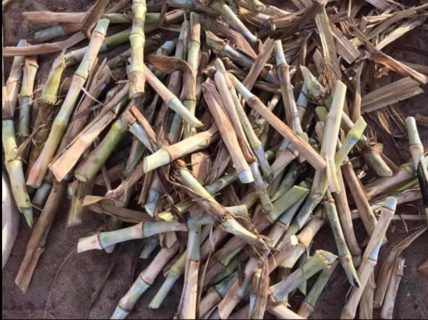 super-napier-grass-cutting-sale-big-2
