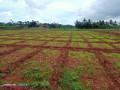 jaffna-navakkiri-farm-land-for-sale-small-4