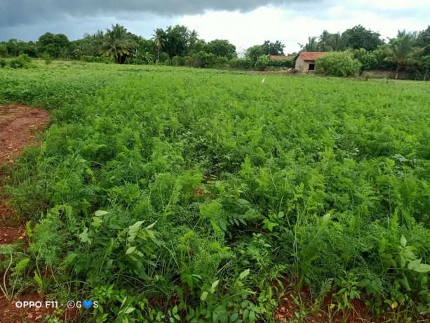 jaffna-navakkiri-farm-land-for-sale-big-1