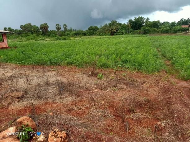 jaffna-navakkiri-farm-land-for-sale-big-0