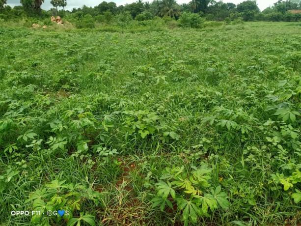 jaffna-navakkiri-farm-land-for-sale-big-2