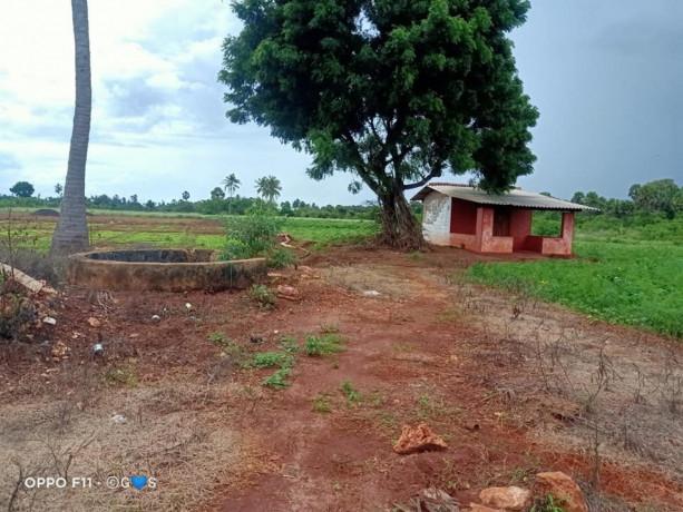 jaffna-navakkiri-farm-land-for-sale-big-3
