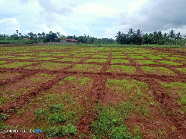 jaffna-navakkiri-farm-land-for-sale-big-4