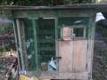 40-pigeon-sale-in-jaffna-small-4