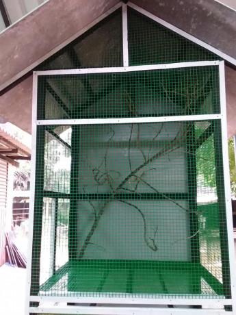 birds-cage-for-sales-big-0