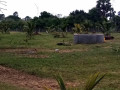 land-house-for-sale-in-kilinochchi-small-0