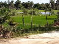 land-house-for-sale-in-kilinochchi-small-1