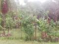 land-for-sale-in-jaffna-madduvil-small-0
