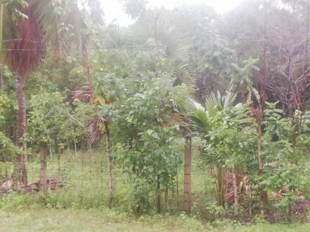 land-for-sale-in-jaffna-madduvil-big-0