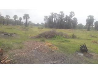 Land for sale in Kilinochchi