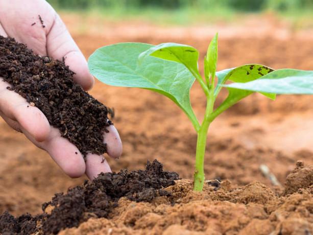 natural-compost-for-sale-big-2