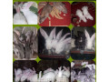 rabbit-for-sale-in-mullaitivu-small-2