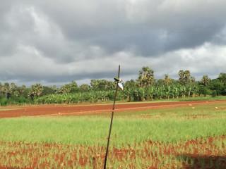 Farm land for sale in jaffna punnalaikkadduvan