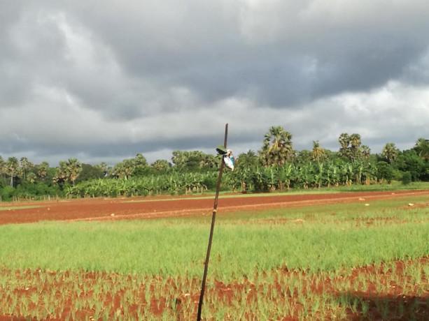farm-land-for-sale-in-jaffna-punnalaikkadduvan-big-0