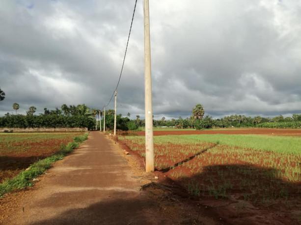 farm-land-for-sale-in-jaffna-punnalaikkadduvan-big-3