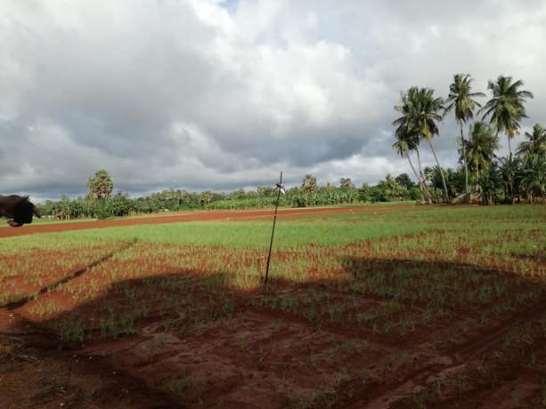 farm-land-for-sale-in-jaffna-punnalaikkadduvan-big-2