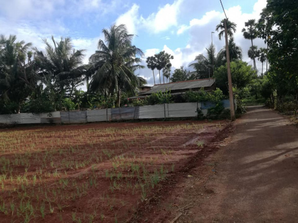 farm-land-for-sale-in-jaffna-punnalaikkadduvan-big-1