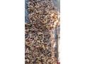 turmeric-seeds-for-sale-in-vavuniya-jaffna-small-1
