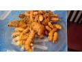 turmeric-seeds-for-sale-in-vavuniya-jaffna-small-3