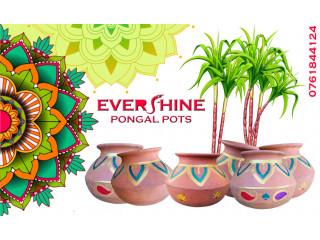 Thai pongal pots sale in Jaffna