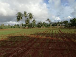 Land for sale in Urelu jaffna