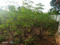 land-for-sale-in-jaffna-small-3