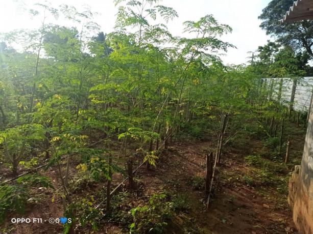 land-for-sale-in-jaffna-big-3