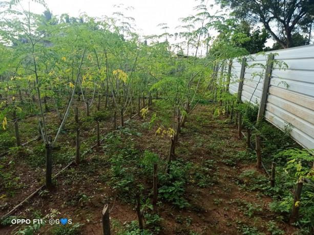land-for-sale-in-jaffna-big-0