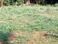 land-for-sale-in-kilinochchi-small-1