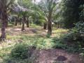 land-for-sale-in-kilinochchi-small-0