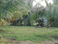 coconut-land-for-sale-in-palai-small-2