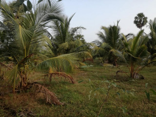 Coconut land for sale in palai