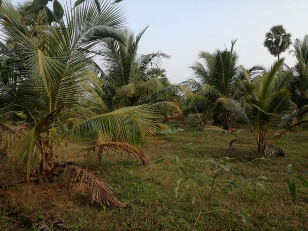 coconut-land-for-sale-in-palai-big-0