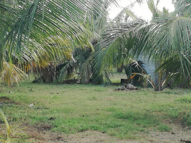 coconut-land-for-sale-in-palai-big-2