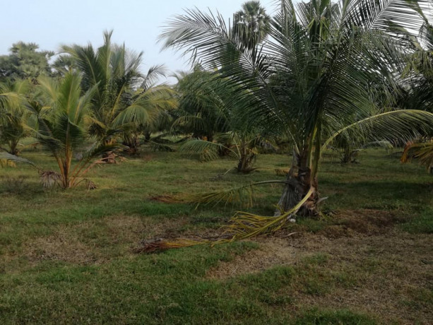 coconut-land-for-sale-in-palai-big-1