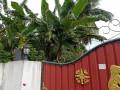 house-for-sale-in-jaffna-chavakachcheri-small-3