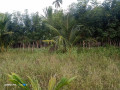 land-for-sale-in-mirusuvil-small-2
