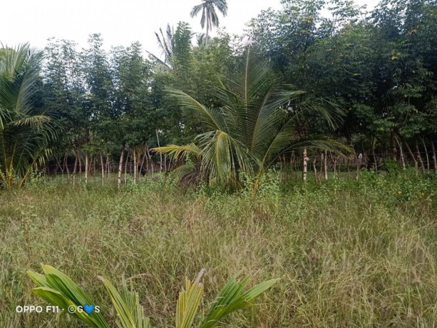 land-for-sale-in-mirusuvil-big-2