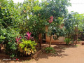 house-for-sale-in-jaffna-small-3